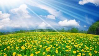 713354-1366x768-flowers