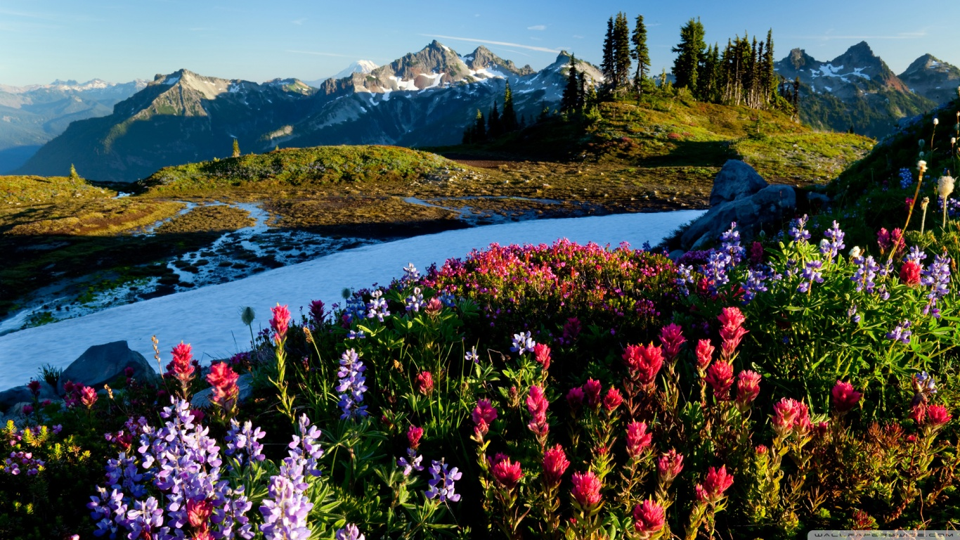 mountain_flowers-wallpaper-1366x768